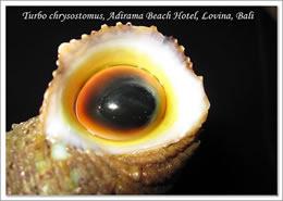 Adirama Shells